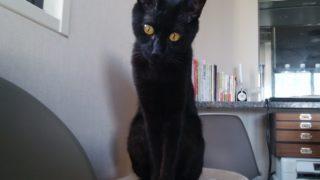 【猫】ウールサッキング(異食症)の猫と暮らす